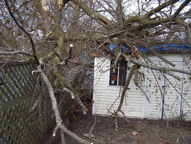 Click image for larger version  Name:mansion-tree-shed.jpg Views:243 Size:101.8 KB ID:8279